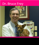 Dr. Bruce Frey's professional interests include orthopedic surgery and bovine medicine.   <BR />